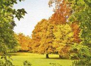 "Фотообои 4 листа ""Осенний шепот Х5""Люкс ТП (136*194)"